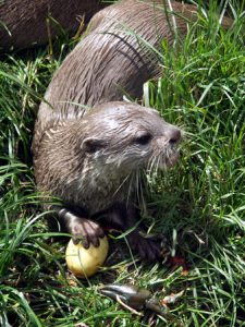 photography-otter