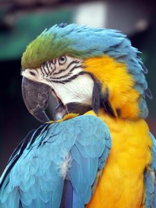photography-parrot
