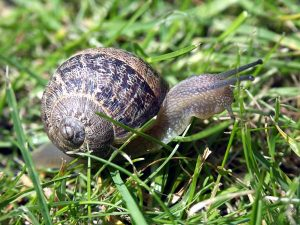 photography-snail